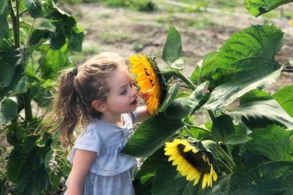 Sunflower girl in June Garden