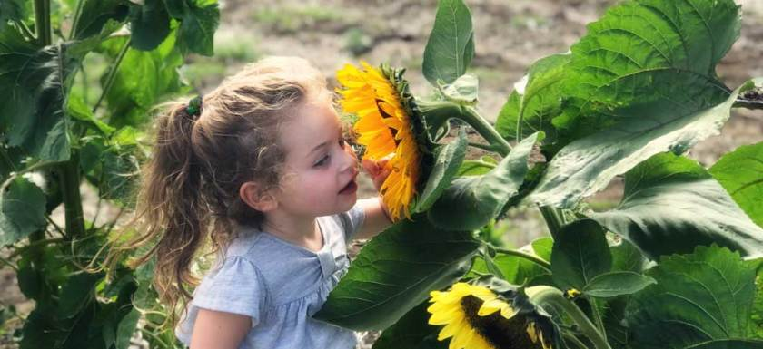 Sunflower girl in June Garden