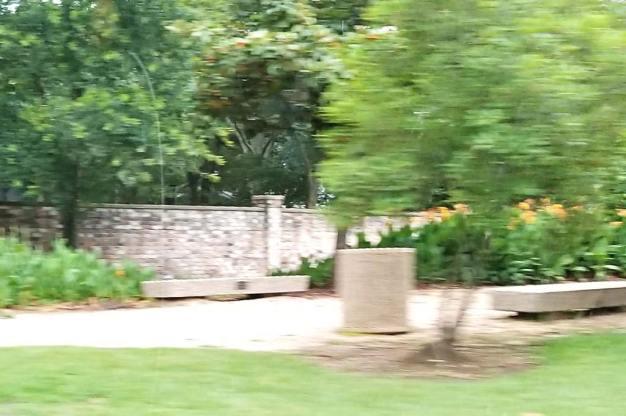 Carol Tree Park