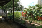 city-sprouts-garden