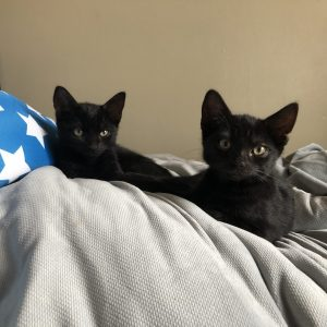 two black kittens lying on a bed