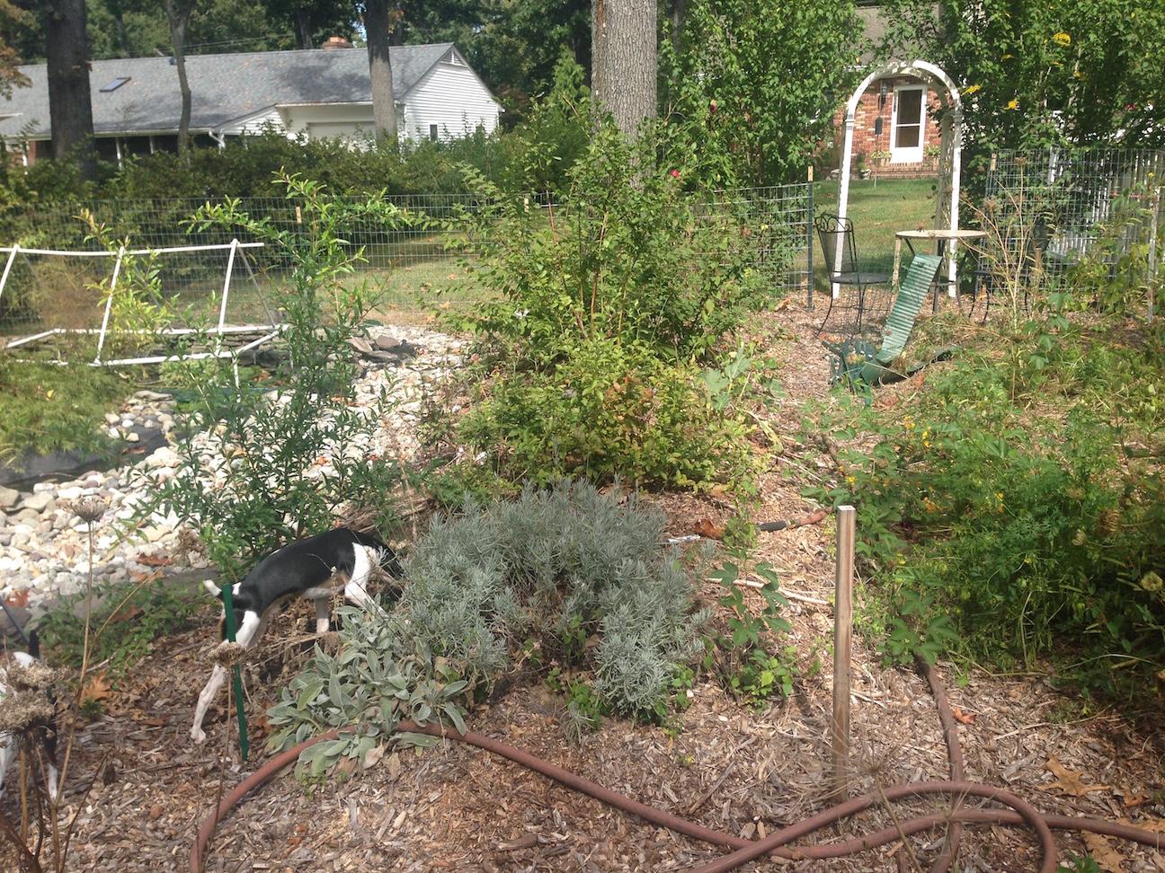 Hugelkultur Permaculture Garden