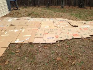 Building A Plant Propagation Bed Part 1 - Cardboard Down