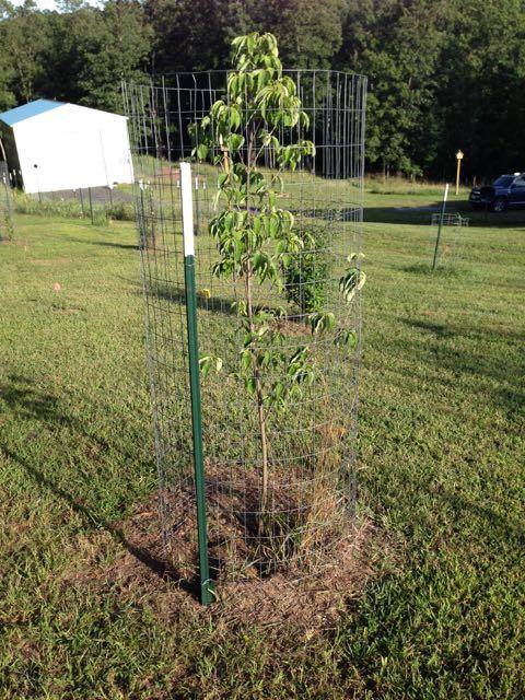 Food Forest Design Update, Deer Issues, Mulching