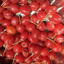 Sweet Scarlet Goumi Plant Information