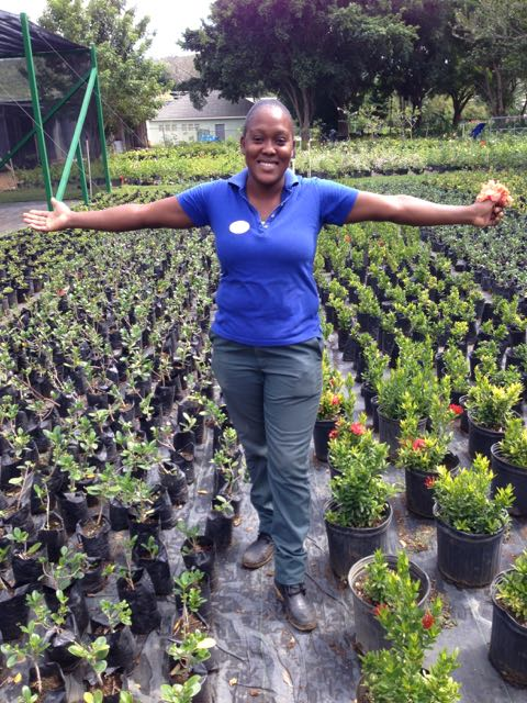 Tropical Plant Propagation in Whitehouse Jamaica