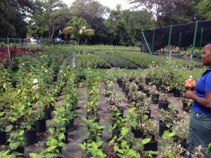 The Sun Plants