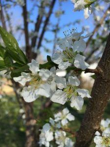 A Spring Walk Around the Homestead