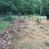Food Forest Update East