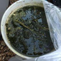 Making Comfrey Manure Tea