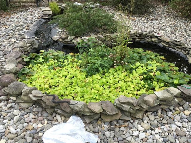 Fish Pond Winterization | Preparing for Winter