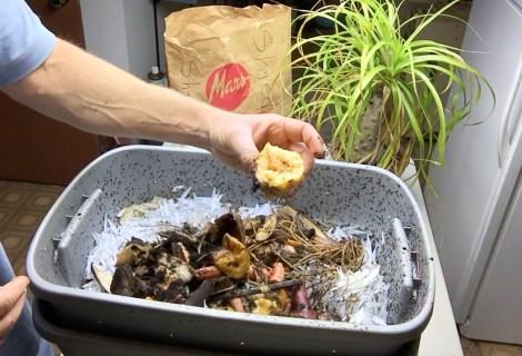 Red Wiggler Worm Compost Bin Update