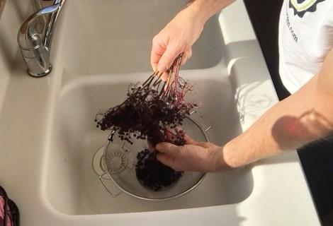 Preparing Elderberries for Recipes