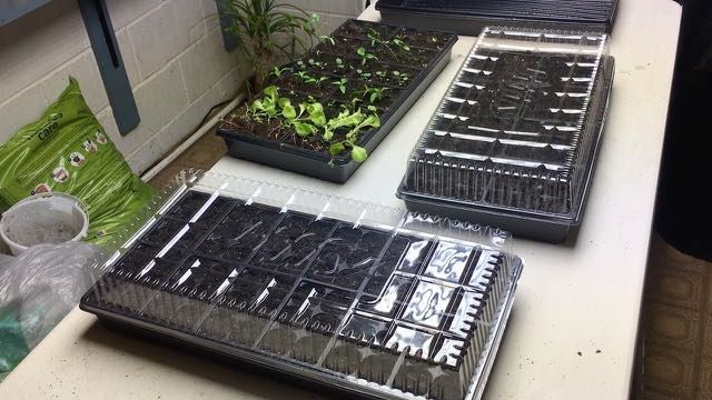 Indoor Plantings Update - Seeds