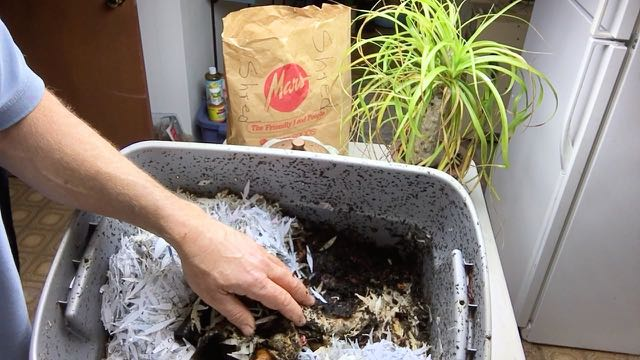 Permaculture and Homesteading Q and A Series No1 - Red Wiggler Worm Compost Bin Update