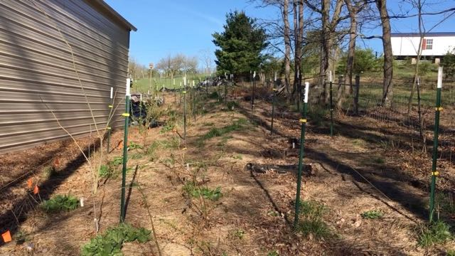 Food Forest Garden Update WV April 2017