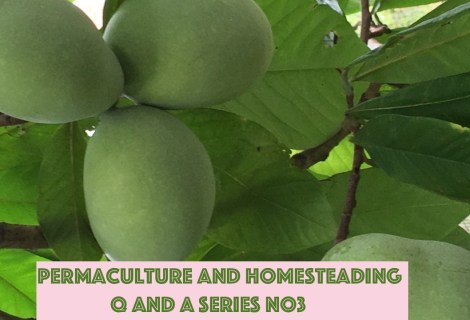 Permaculture and Homesteading Q and A Series No3