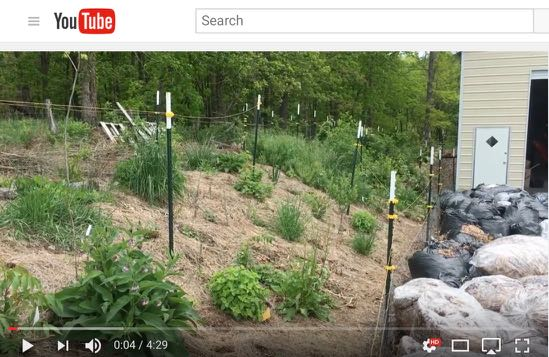 Food Forest Weeding - Video