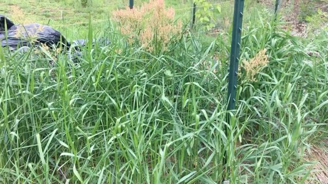 Food Forest Weeding - Weeds