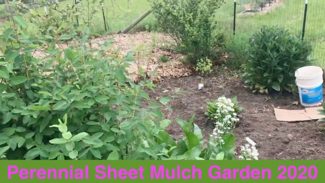 Perennial Sheet Mulch Garden 2020 - The Down and Dirty