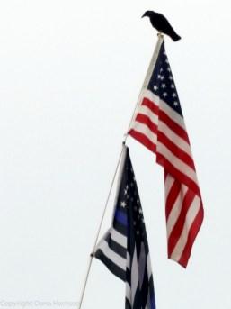 Miramar Beach, FL - crow on US flag
