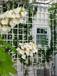 Seaside White trellis Window