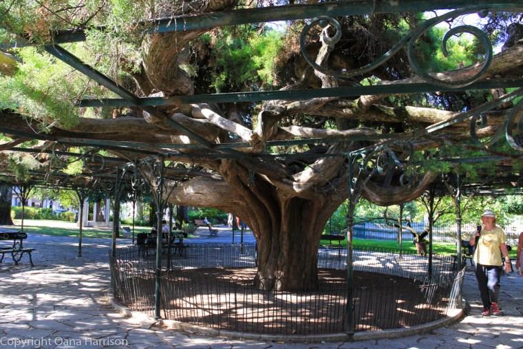 Beautiful tree in Lisbon park