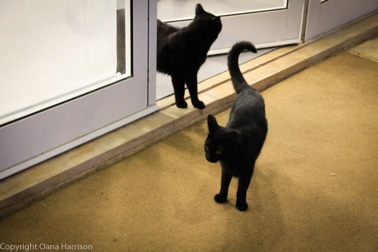Cascais cats