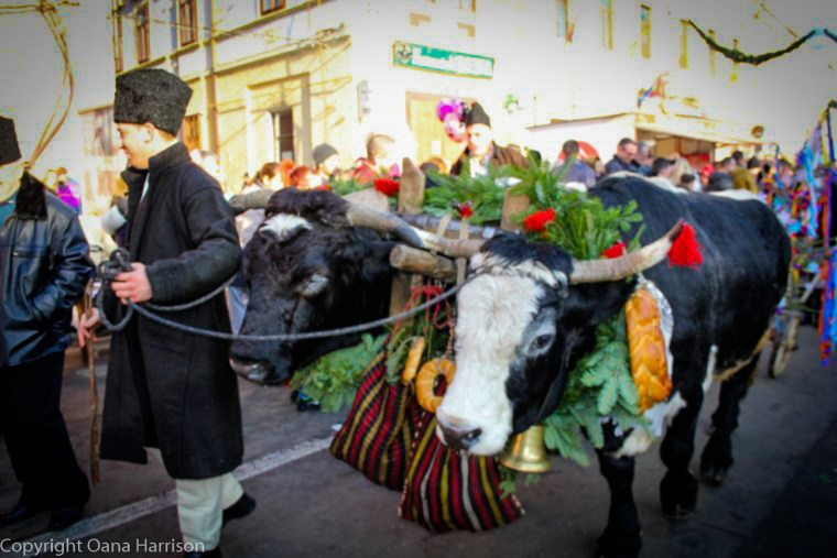 Romanian Traditions Christmas Maramures