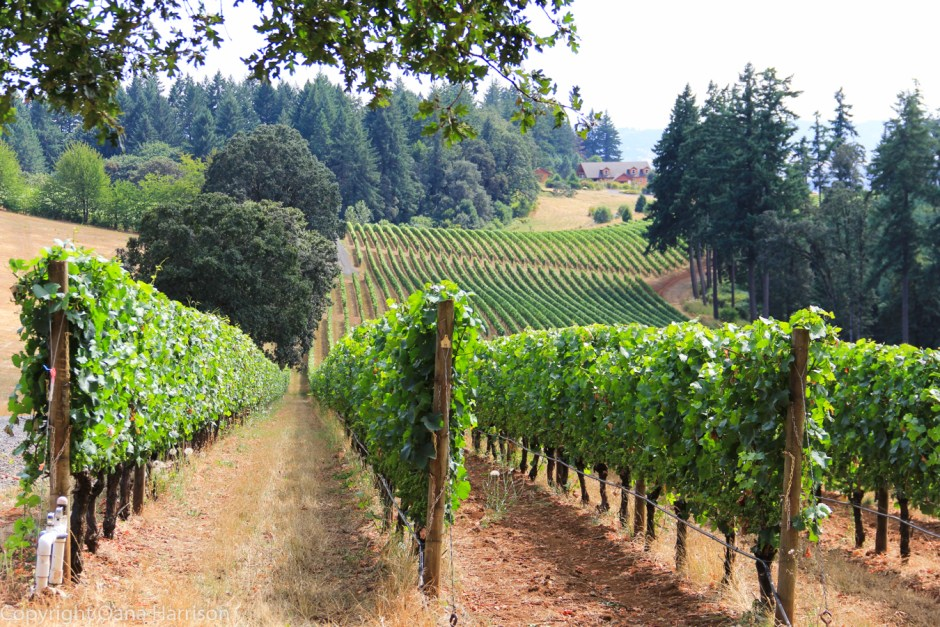 Oregon-Willamette-Valley-Domaine-de-Broglie