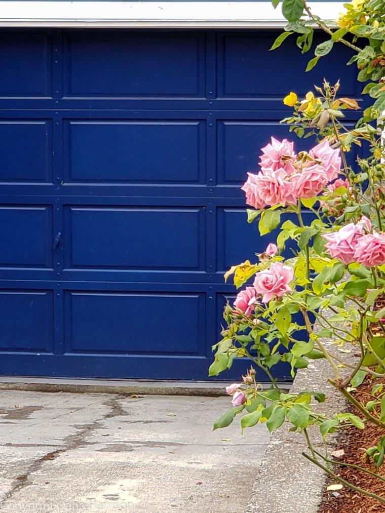 53-Victoria-BC-CA-blue-door-pink-roses