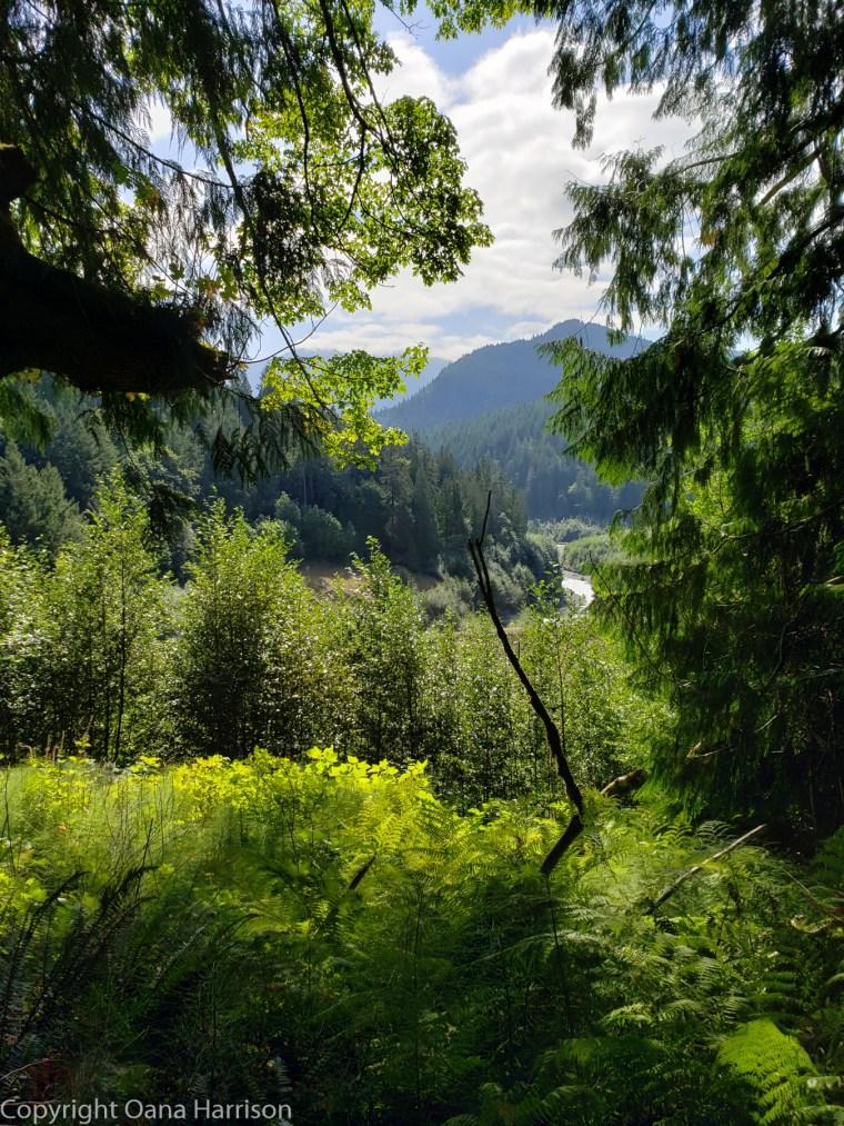 Elwha-Dam-RV-Park-Hike-05