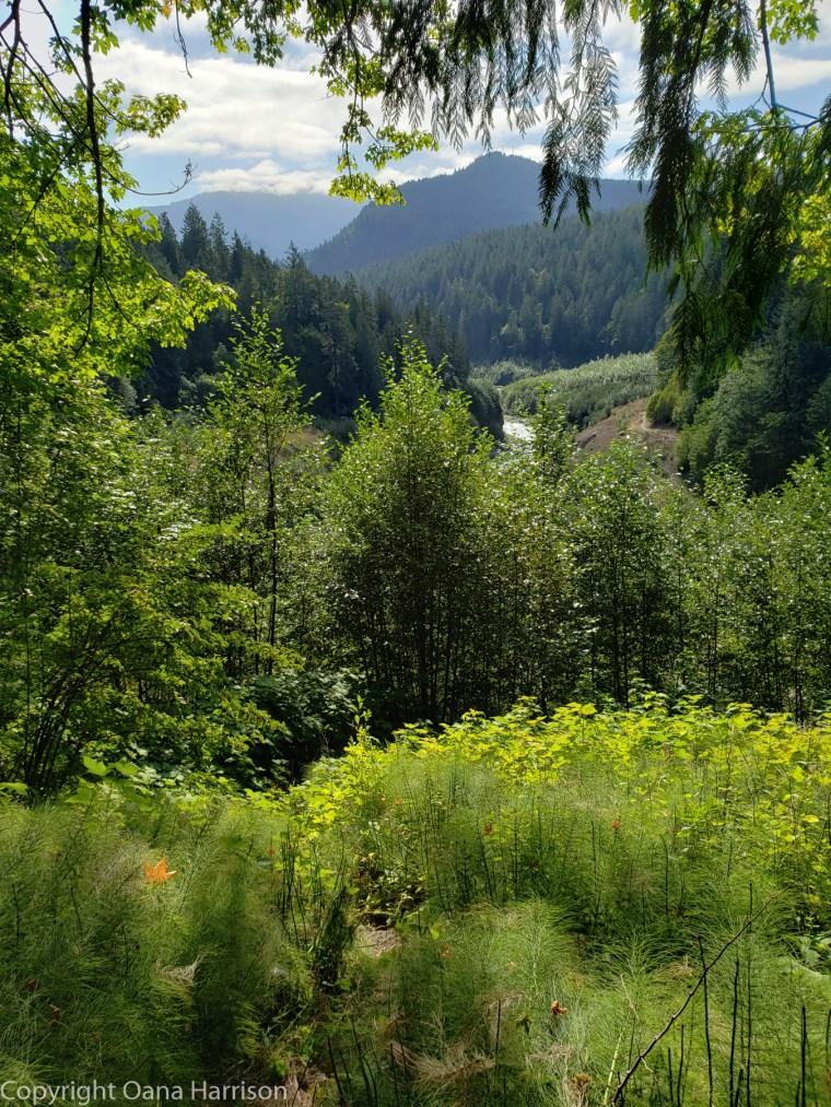 Elwha-Dam-RV-Park-Hike-09