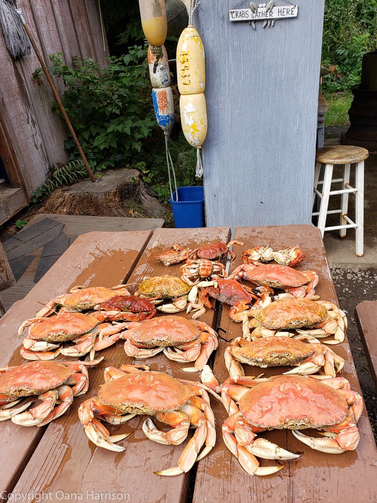 Netarts-Bay-OR-Crabbing-24-Dungeness-crab