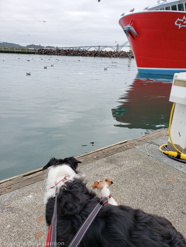Newport-OR-Chelsea-Rose-dogs-watching-birds