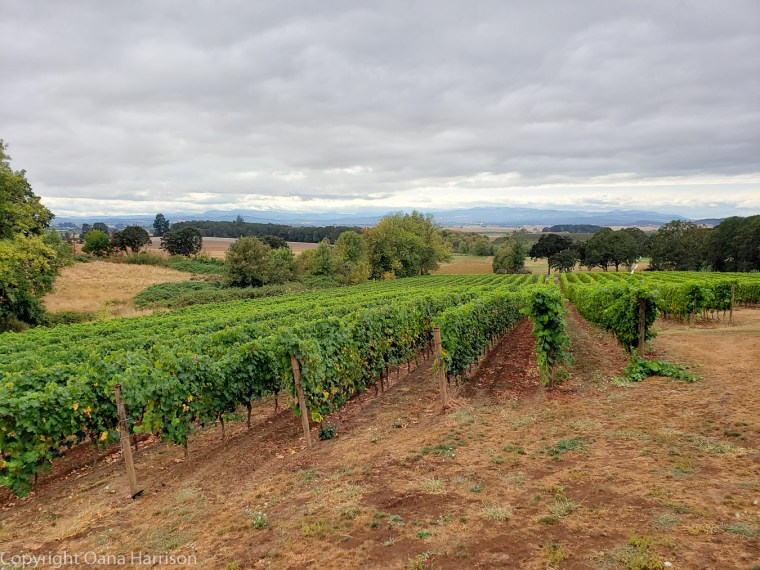 Eola Hills Legacy Winery Salem Oregon rows of vines