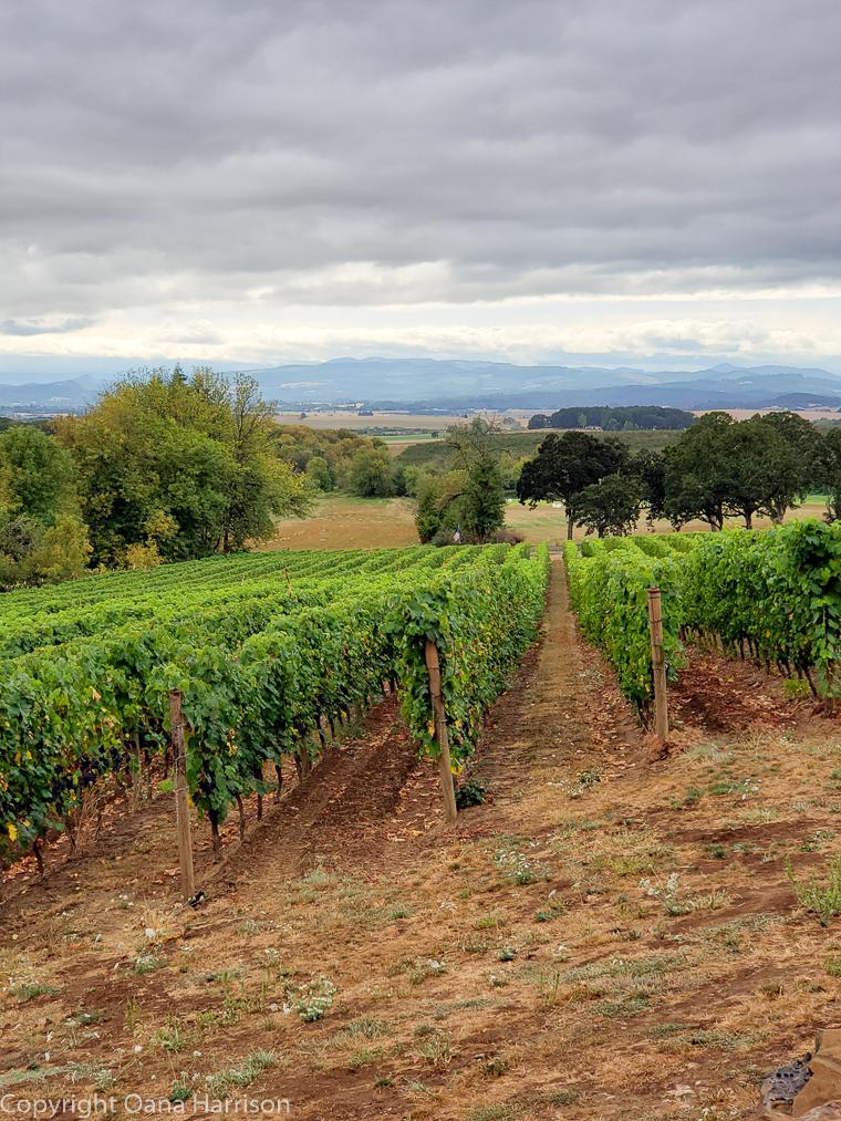 Eola Hills Legacy Winery