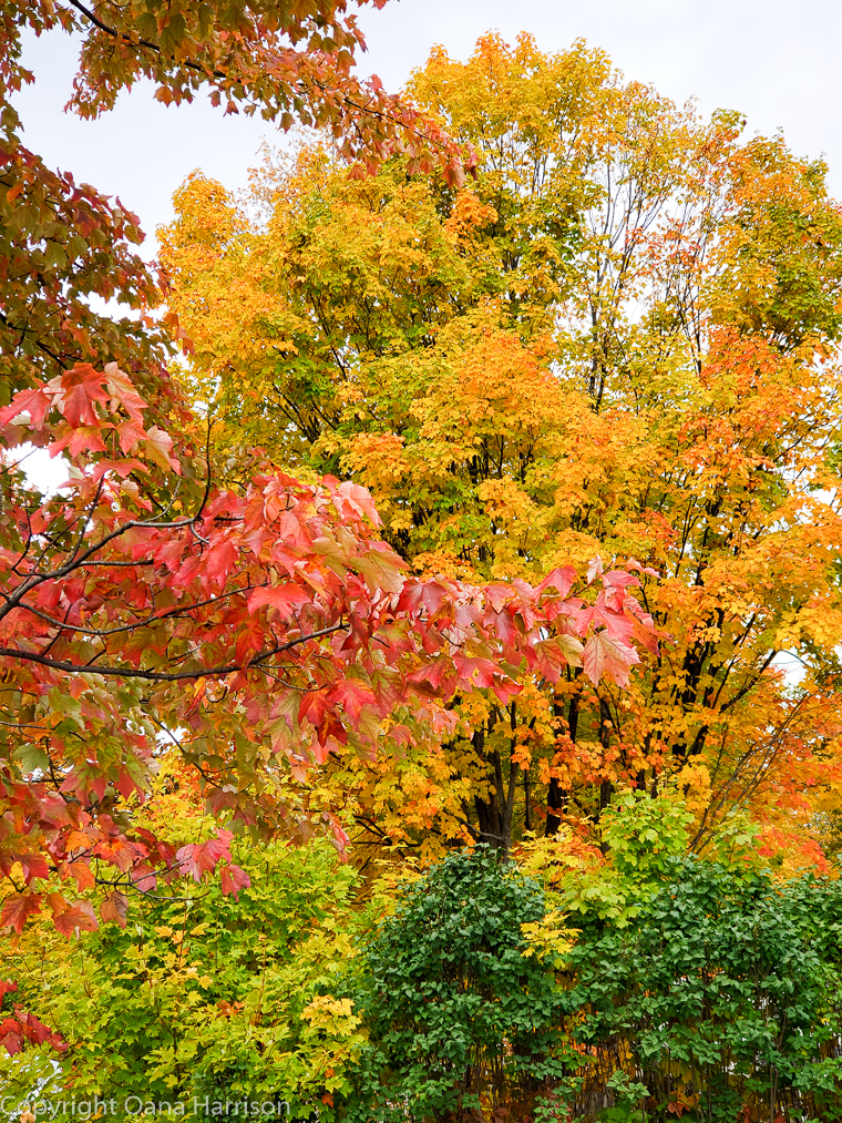 Fall colors at RV park in Quebec City