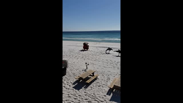 Santa's sleigh on Miramar Beach view from Surf Hut