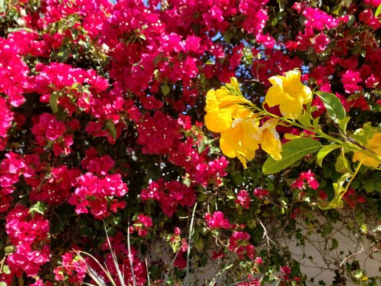 Bright fuchsia and yellow flowers