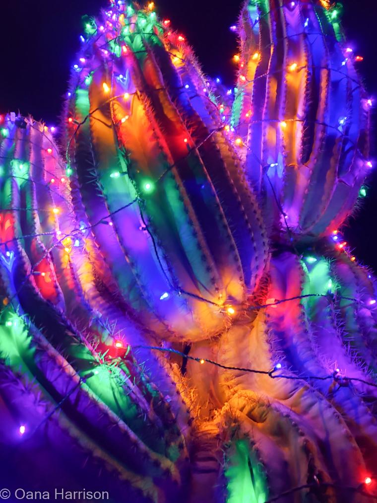 Las Colinas RV Park Eloy Arizona cacti with Christmas lights