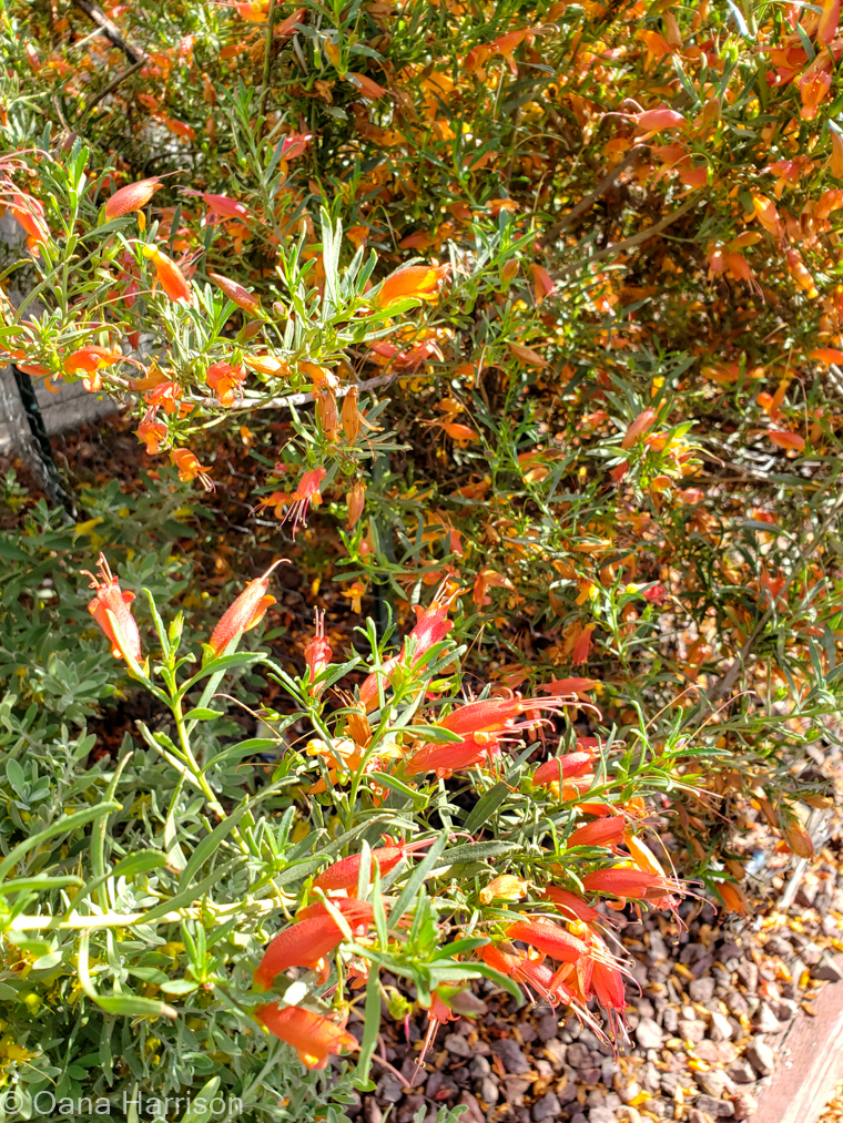 Cactus Country RV Park Arizona orange flowers