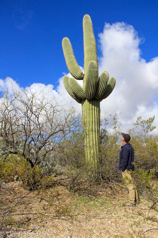 Saguaro National Park, Arizona