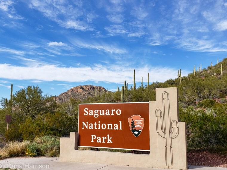 Saguaro West Arizona