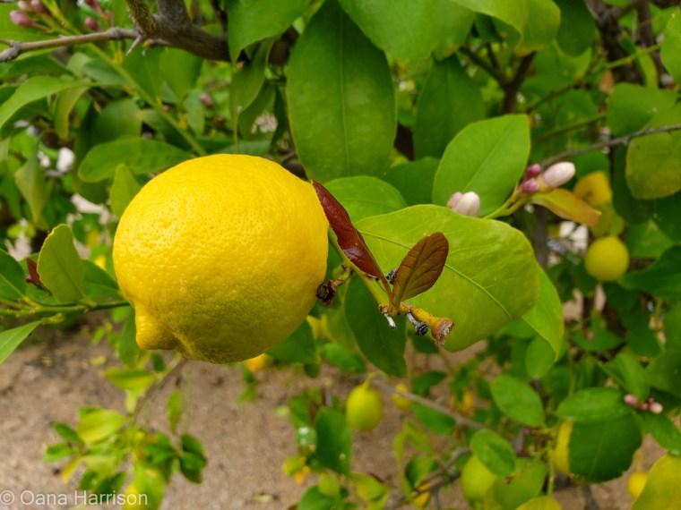 Western Way RV Park Tucson Arizona lemon