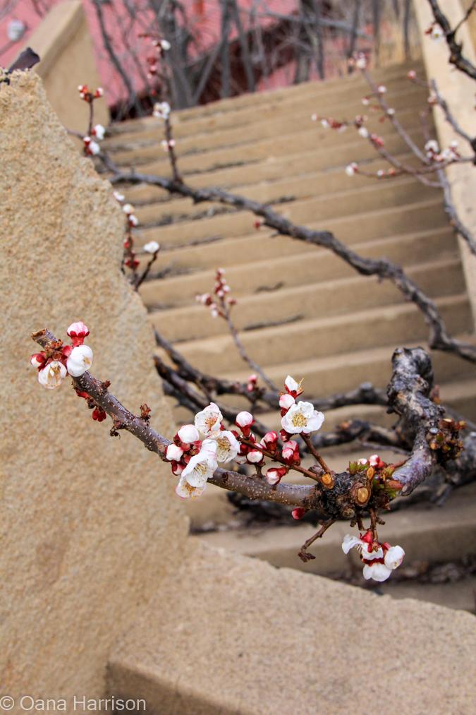 Flower buds, Jerome, Arizona