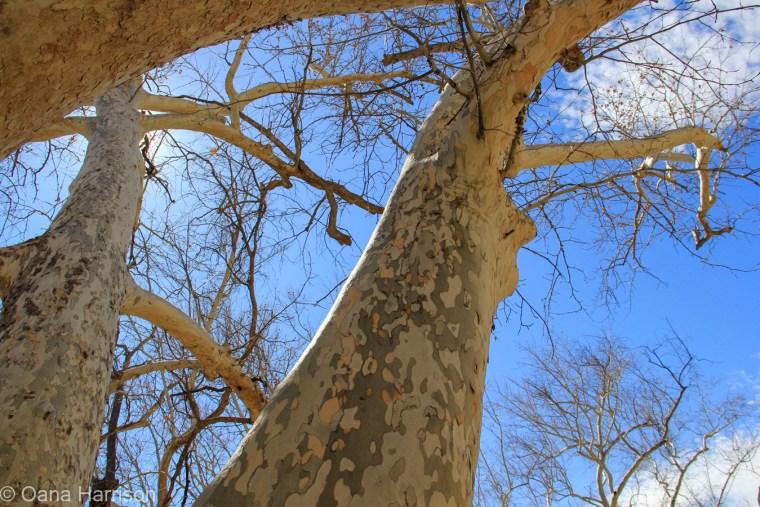 Montezuma Castle National Monument, Arizona, trees