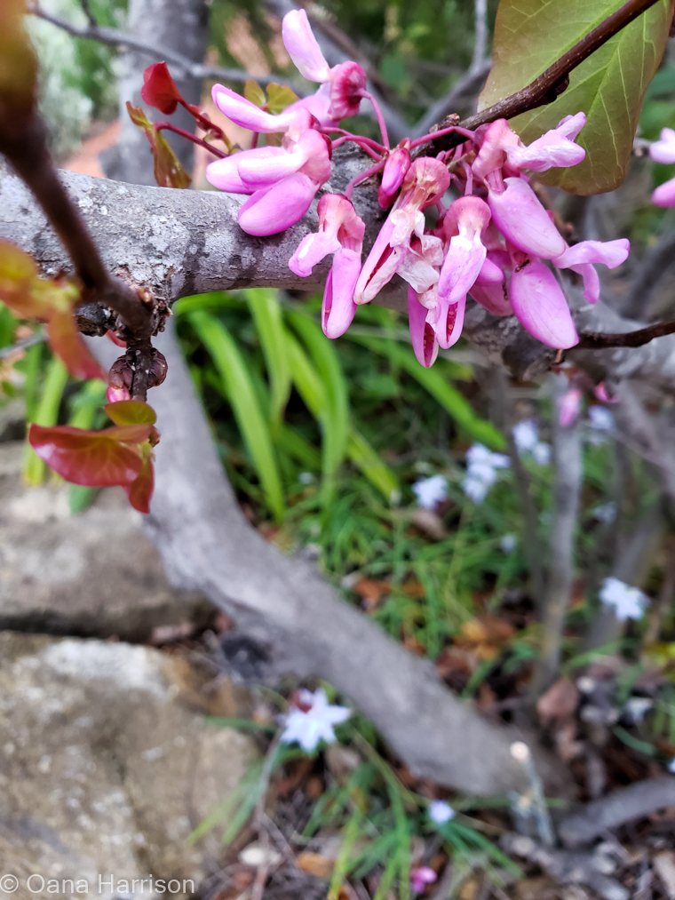 Santa Barbara, California, flowers