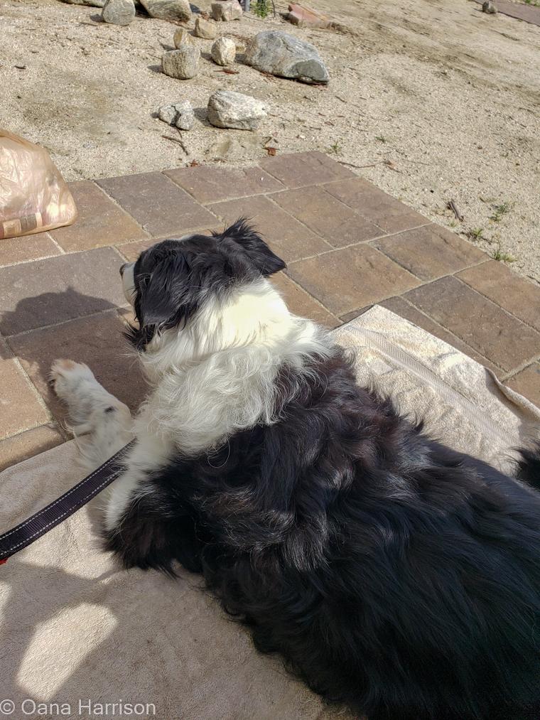 Sky Valley Desert Hot Springs CA, Kylie dog