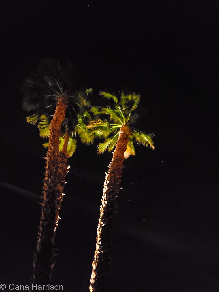 Sky Valley Desert Hot Springs CA, palm trees at night